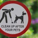 Про собак и их хозяев